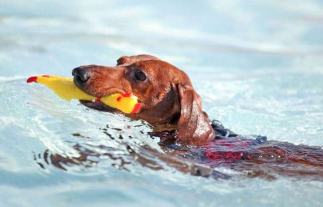 Doggie Splash Day in Mesquite, Texas