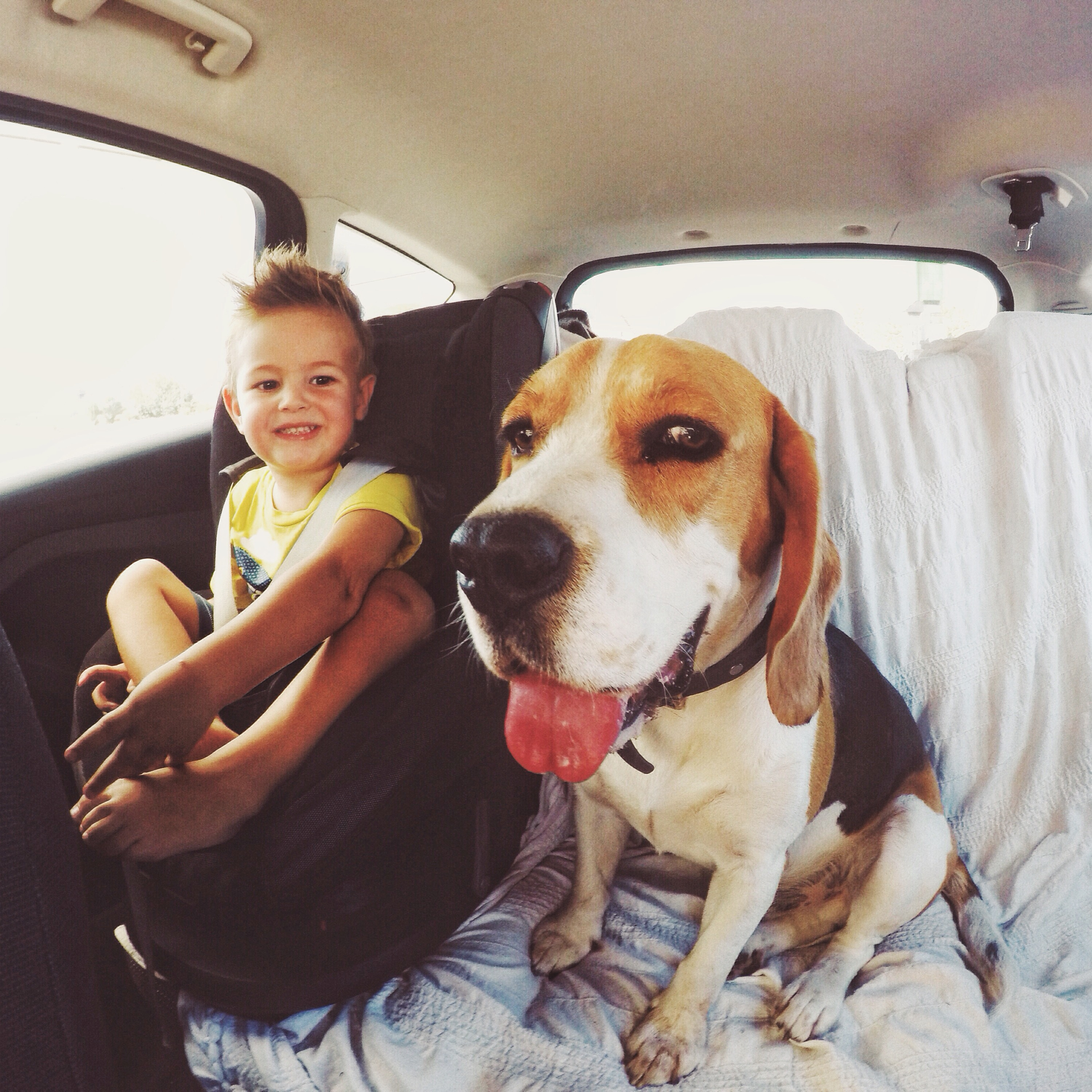 boy smiling with dog in the backseat