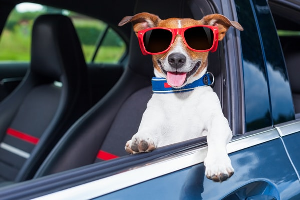 how to pack for your dog during road trips