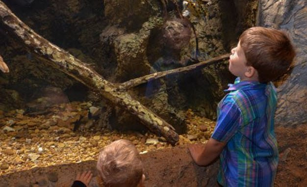 Animal Exploration - River Legacy Science Center