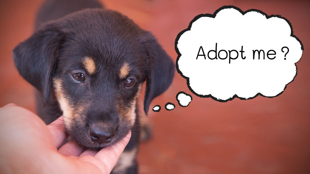 the street doesnt adopt pets Read more: dogs, french bulldog, poodle, schipperke, pembroke welsh corgi, maltese, choosing a pet, living with pets, choosing a.